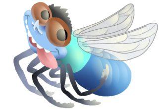 dessin d'une mouche