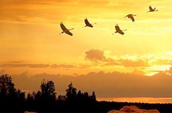 pourquoi les oiseaux volent-ils vers le sud